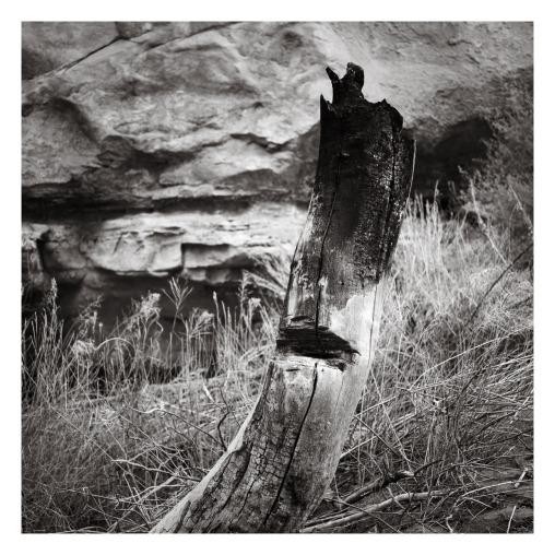 Skeletons #7